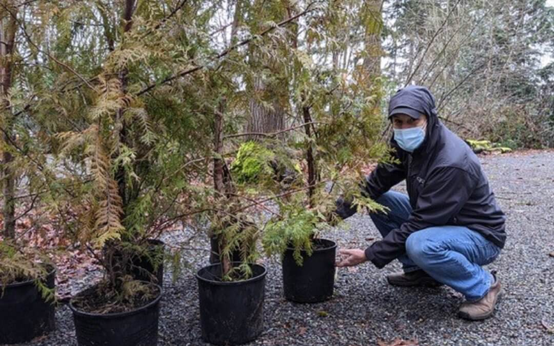 300 Trees Give Away